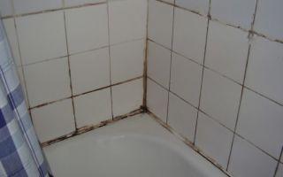 Удаление плесени в ванной: как убрать плесень раз и навсегда