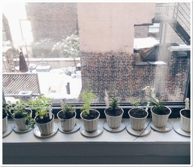 зелень можно вырастить на подоконнике зимой