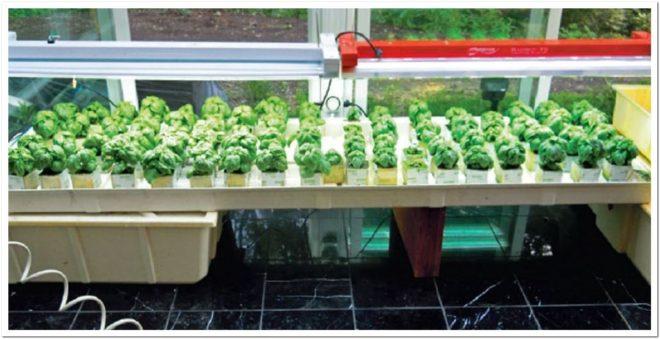 лампы для выращивания зелени на подоконнике зимой