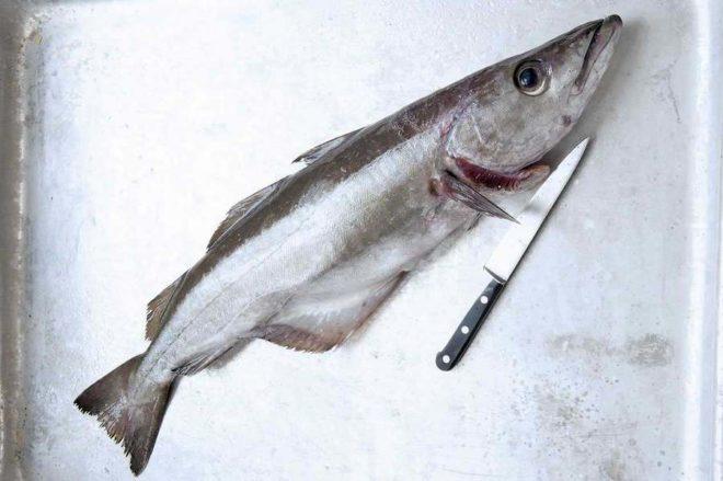 сколько в рыбе белка на 100 грамм
